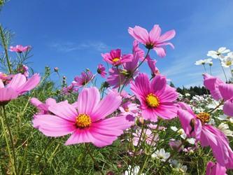 一面に咲き誇る秋の花々 親子で参加できるイベントで楽しもう