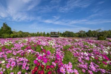 自然豊かな広大な敷地に咲き誇る 秋の花々とイベントを満喫しよう