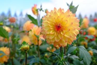 鮮やかで多種多様な花が咲き誇る ダイナミックな花絵は必見!